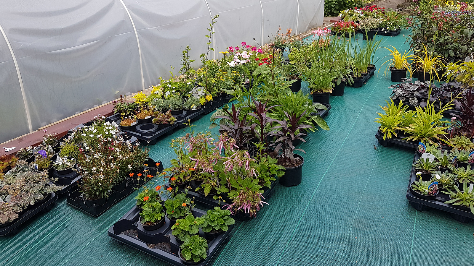 whickham-plants-for-sale